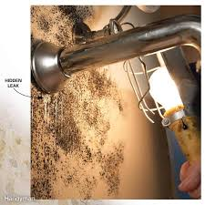 10 Tips For Removing Mold and Mildew | Family Handyman