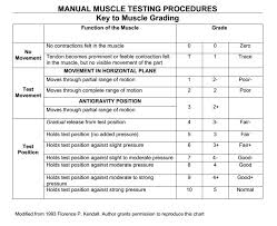 Mmt Grades Muscle Strength Testing And Manual Muscle Grades
