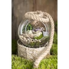 hanging terrarium diy kit thick glass terrarium container for succulent cacti air fern plants moss garden