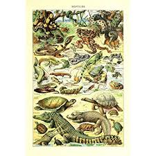 Snake Identification Chart Retro Vintage Poster Print Wall Art Decor Animals Species Identification Collection Reference Chart Reptiles Turtle Snake Biology Science