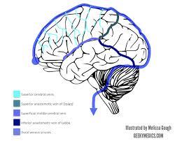 Venous Blood Flow Chart Venous Drainage Of The Brain Anatomy Geeky Medics