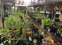native plant speaker series at the key west tropical forest