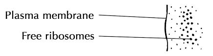 Cell Organelles Cells The Basic Units Of Life Siyavula