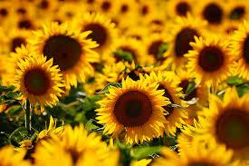 美しすぎる!花の可愛くて綺麗な高画質の画像まとめ