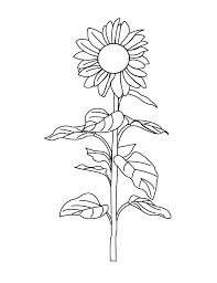 Small Picture Coloring Pages Sunflower
