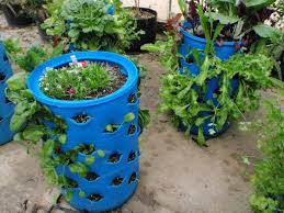 barrel garden. Barrel Garden E