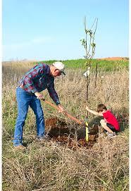 What Does Dwarf Fruit Tree Mean U2013 Home Garden JoyDwarf Fruit Trees Virginia
