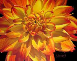 custom made yellow orange variegated dahlia oil painting