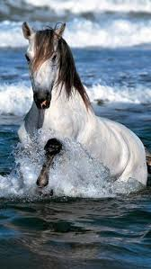 beautiful horses running in water. Plain Water Use 9 Beautiful White Running Horse Wallpapers For Your Desktop Background  You Can Share Below Horses  With In Water T