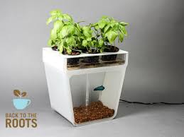 Labyrinth Fish Tank Home Aquaponics Kit Self Cleaning Fish Tank That Grows Food By