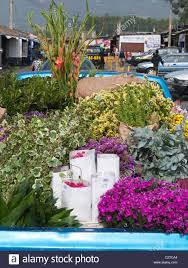 A pickup truck with a bed full of colorful flowers delivers them to ...