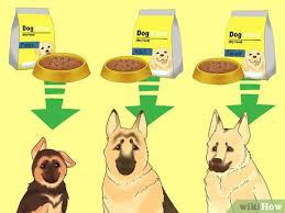 German Shepherd Puppy Food Chart 3 Ways To Make Your German Shepherd Gain Weight Wikihow