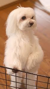 スマホ壁紙 犬の写真 壁紙無料でダウンロードpcやスマホiphoneの