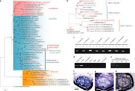 Two Y Chromosome Encoded Genes Determine Sex In Kiwifruit