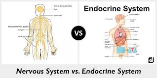 Central Nervous System Vs Peripheral Nervous System Venn Diagram Difference Between Nervous System And Endocrine System Difference