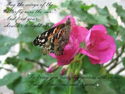 may the wings of the erfly kiss the sun and find your shoulder to light