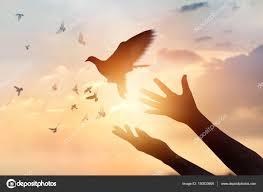 Afbeeldingsresultaat voor afbeeldingen vogels die vliegen