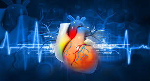 Image result for cardiovascular disease definition