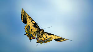 Image result for picture of a butterfly flying