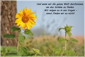 Sonnenblumen Foto Bild Landschaft äcker Felder Wiesen Natur