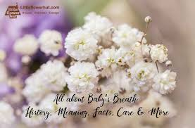 breath history meaning facts