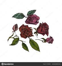 красивые розы листьями руки Drawn иллюстрации нежный цветок набор