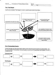 Respiration And Photosynthesis Worksheet - Checks Worksheet