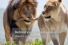 Gorongosa's Big Cats on Pinterest | Lion, National Parks and ... via Relatably.com