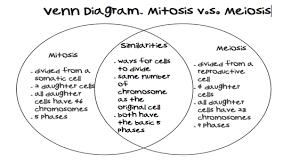 Comparing Mitosis And Meiosis Venn Diagram Nail Kasey 7th Grade Assignments