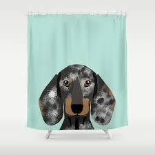 doxie dachshund merle dapple dog cute must have dog accessories dog gifts cute doxies dachshunds des