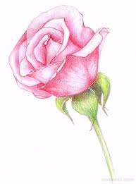 Small Picture The 25 best Flower drawings ideas on Pinterest Pretty flower