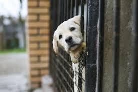animal shelters sad. Modren Sad Sad_dog Throughout Animal Shelters Sad