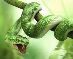 hd wallpapers snake for rac hd wallpapers snake wallpapers full hd