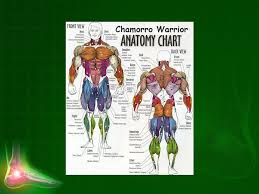 The Muscular System Chapter 7 Qnhq2i Ppt Download