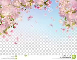 Vector Background Spring Cherry Blossom Sakura Branch