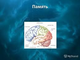 Презентация на тему Память Запоминание Запоминание это процесс  Память
