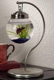 office pet ideas. Hanging Aquarium Office Pet Ideas Furniture Fashion