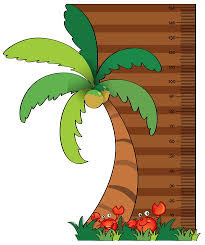 Height Measurement Chart With Coconut Tree Download Free