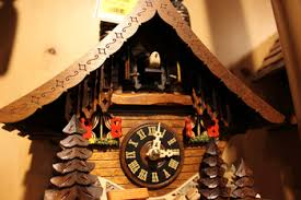 cuckoo bird information lesson for kids com cuckoo clock