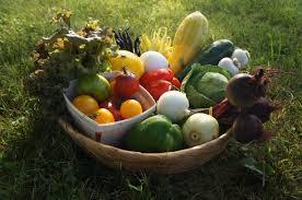 """Résultat de recherche d'images pour """"paniers de légumes"""""""
