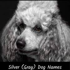 100 clever dog names for a blue or gray dog