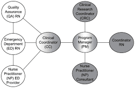 Flow Chart Illustrating Rn Roles And Relationships The