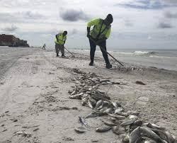 33 Ageless Florida Gulf Coast Tides