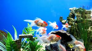 Hd Aquarium Wallpaper Ololoshenka Aquarium Aquarium Fish Fish