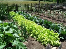Small Picture Vegetable Garden Design Seattle The Garden Inspirations