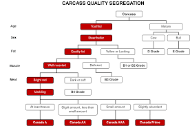 Age And Grade Level Chart Canada Carcass Grading Beef Cattle Research Council