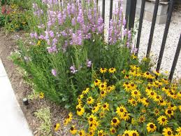 Small Picture Perennials That Like The Sun Best Full Landscaping Ideas On