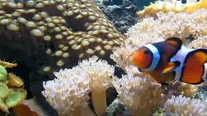 Dentro lacquario marino tropicale youtube