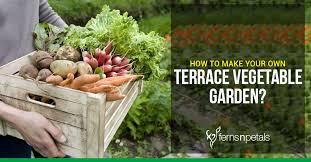 own terrace vegetable garden