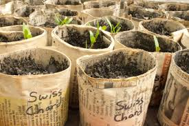 Make Your Own Natural or Recycled DIY Pots for Plants and Seedlings